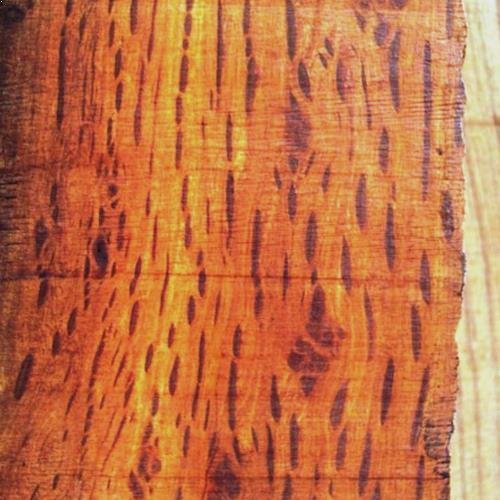 timber-hairy-oak-02.jpg