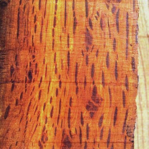 Hairy Oak