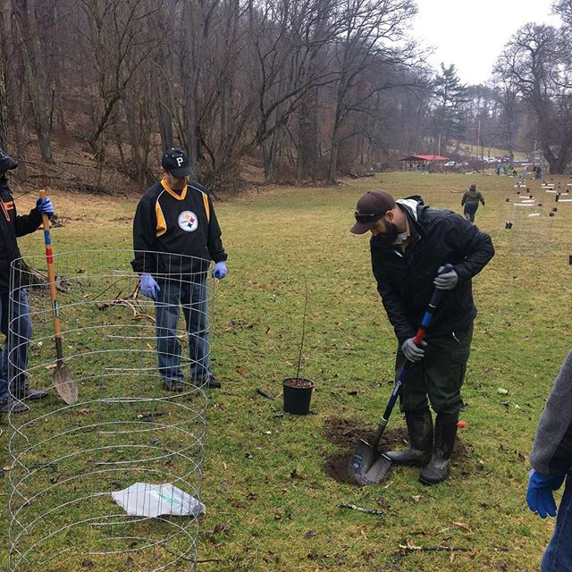 Graduation day for @treepgh trees and shrubs to create a #riparianbuffer in the Pine Creek Watershed with the help of @accd_pa @fedex @alleghenycountyparks @nfwf 🌲🌳🍾 #fedexcares #volunteer  #streamhealth