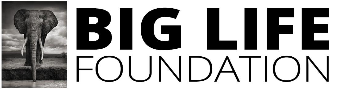 logo-horizontal-01-1100w.png