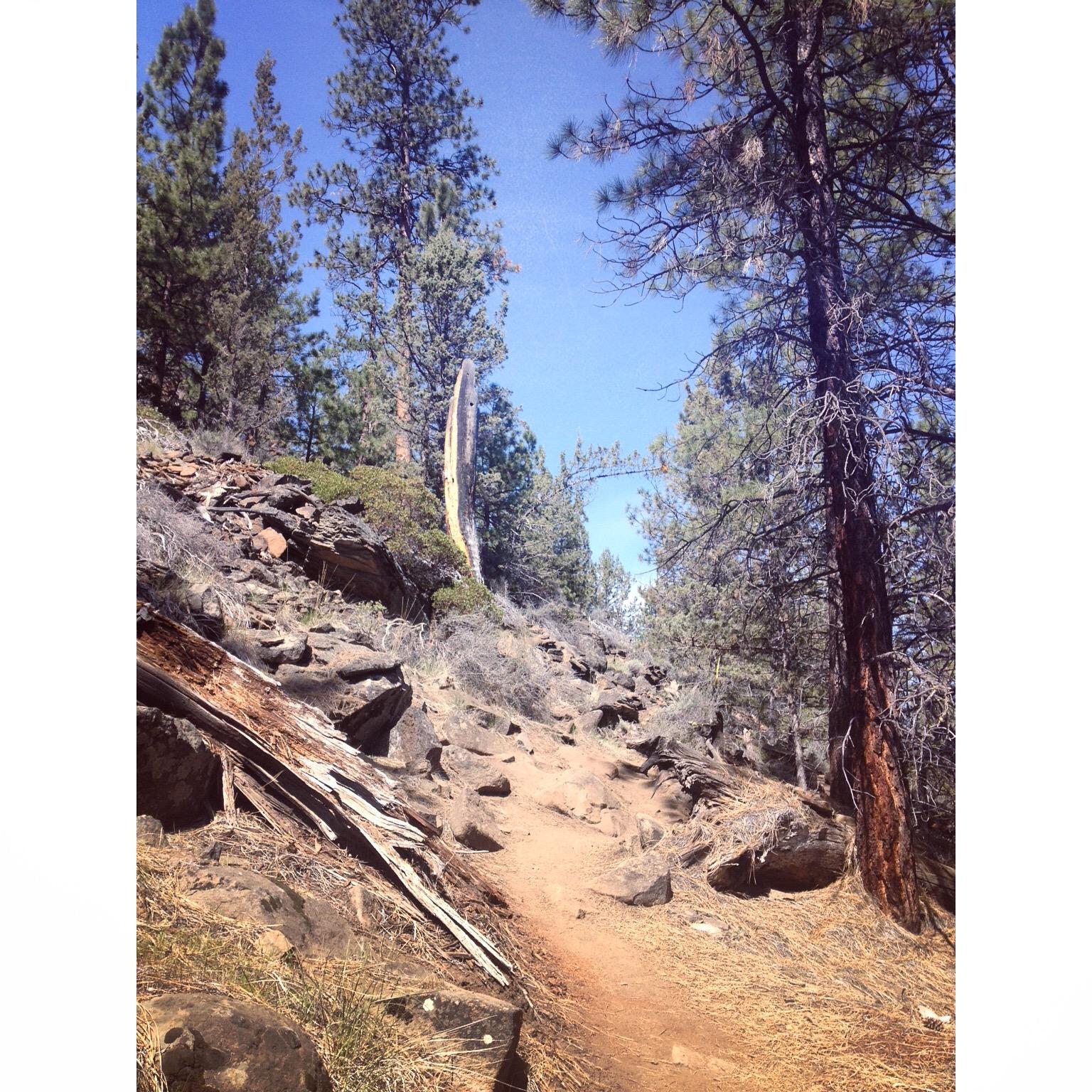 Rocky Trails.