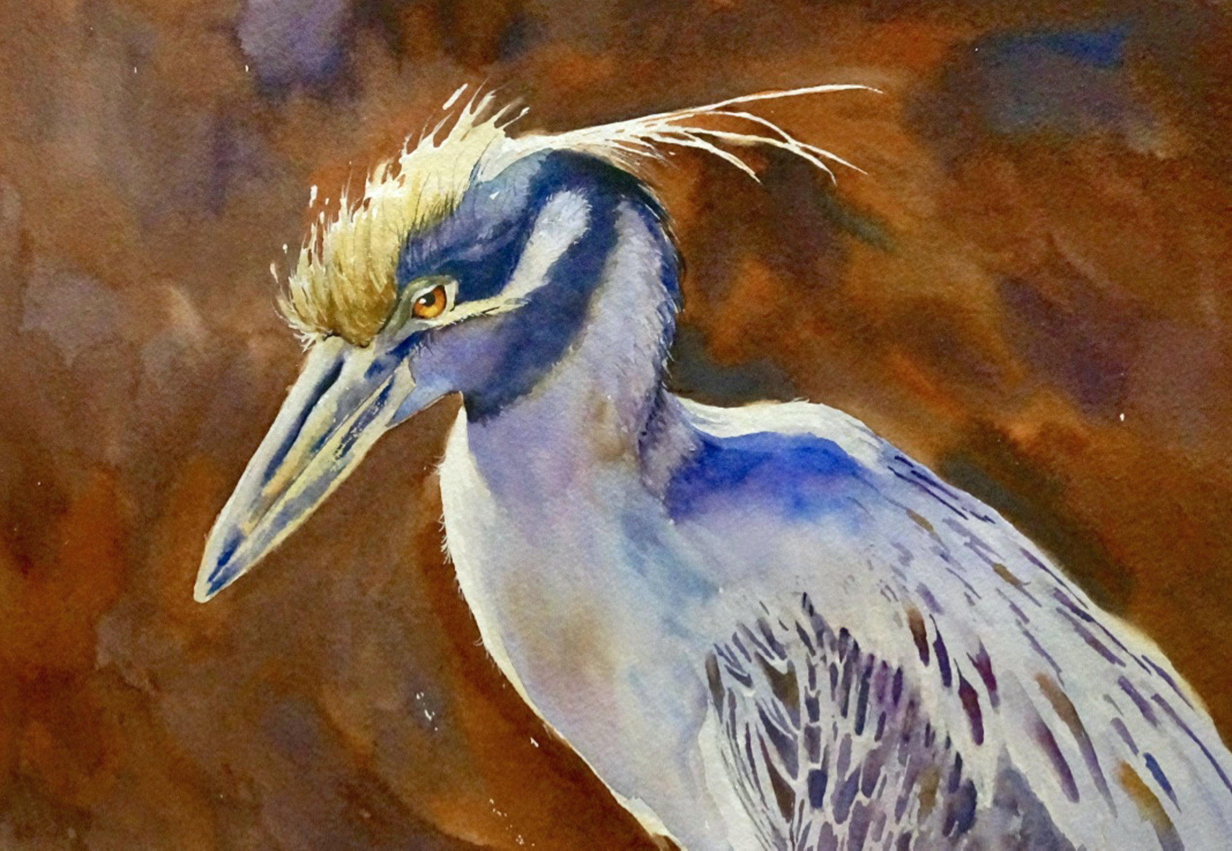 """Yellow Crowned Night Heron"""