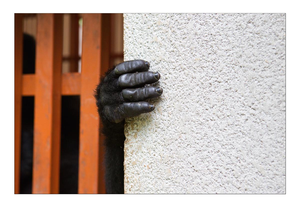 Gorilla_Hand.jpg