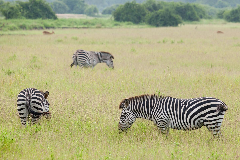safari_zambia001.jpg
