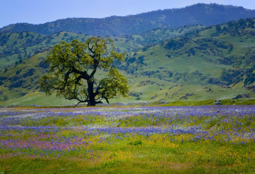 Wildflowers, Photo by Jared Ikeda