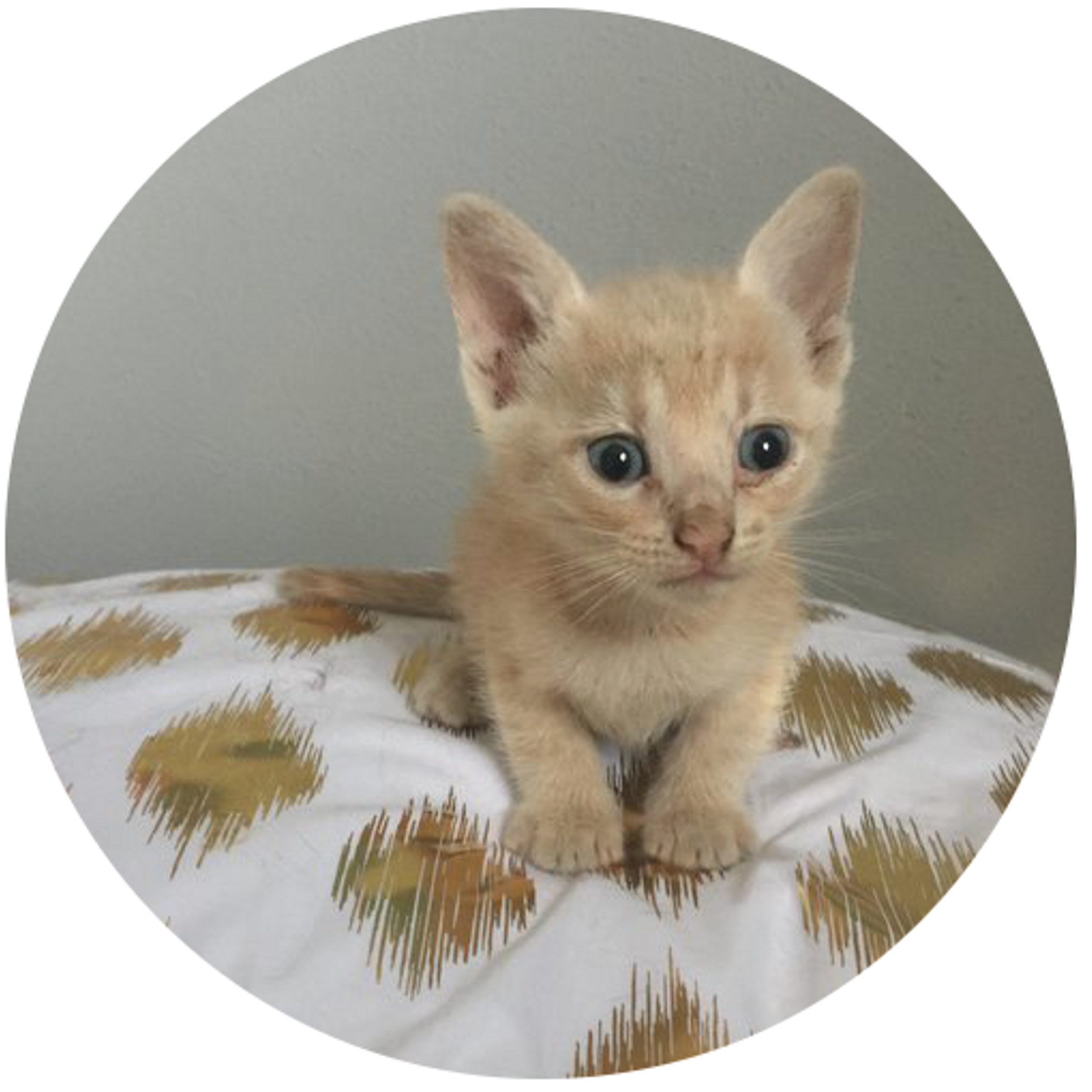 Ethical + Sustainable Cat Care - October 9th, 2019