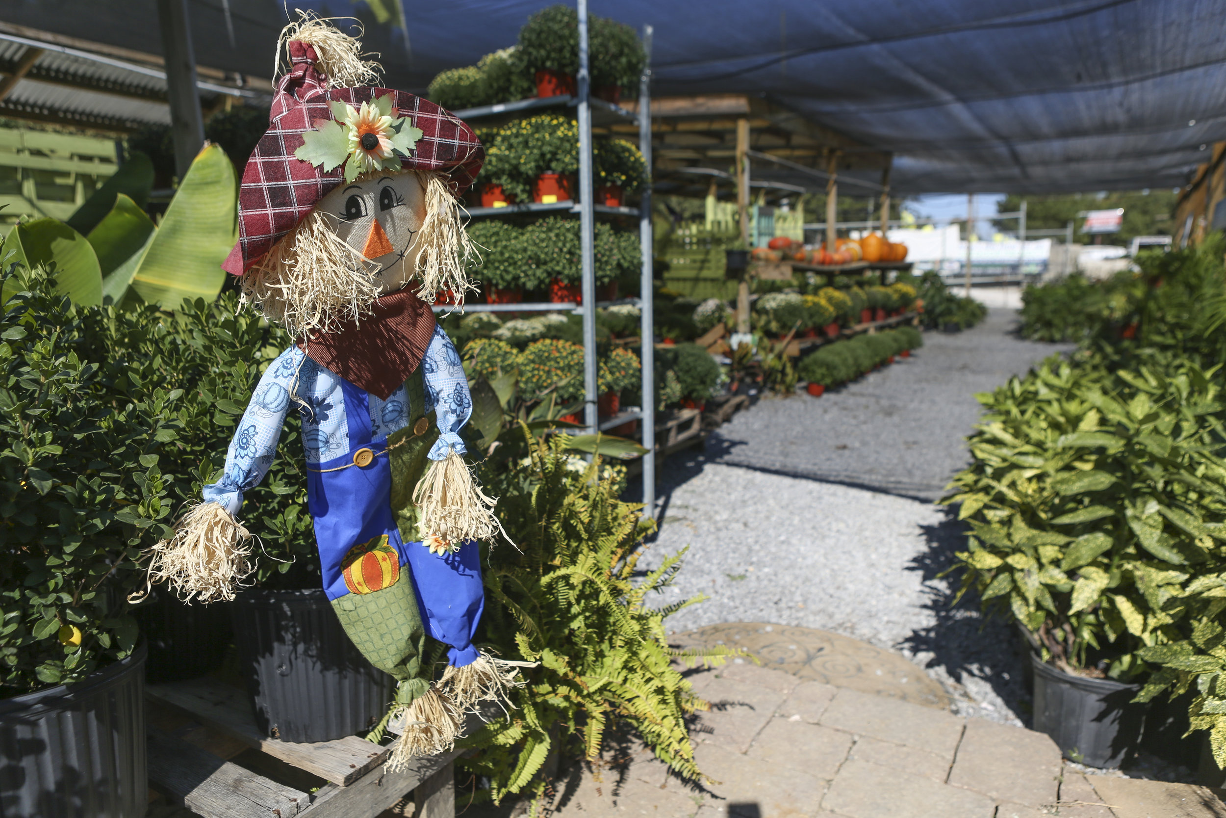 Season plants are available at the Secret Garden