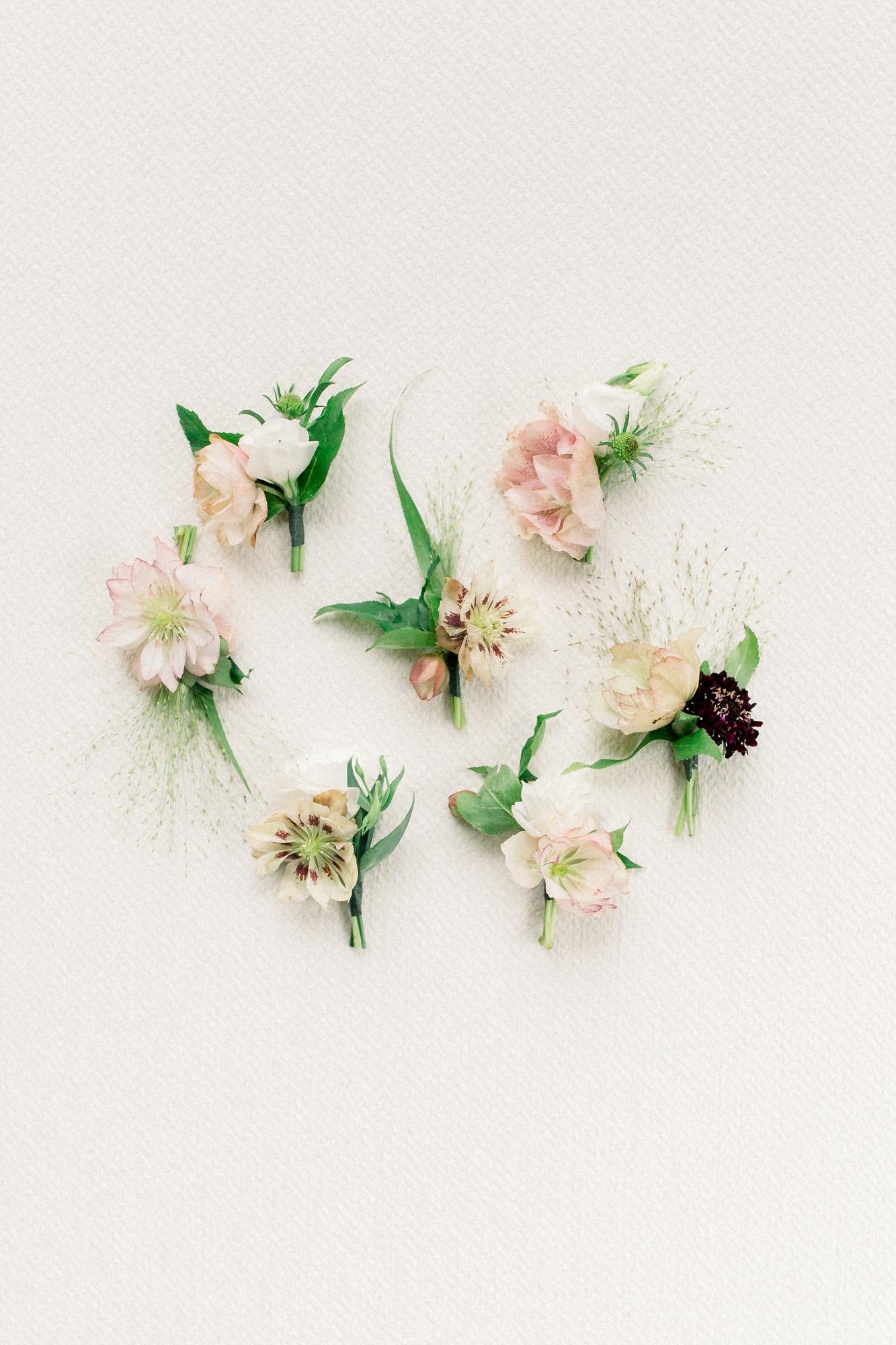 White Sparrow - Lavender Fields - Britt LaShea-8.jpg