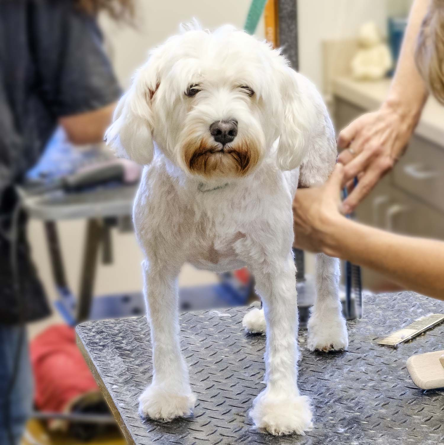 Fancy Fur is a full service groomer. Our services include full groom,mini groom, and baths, as well as walk in services, like anal gland expression, nail trims, face trims, and potty trims.