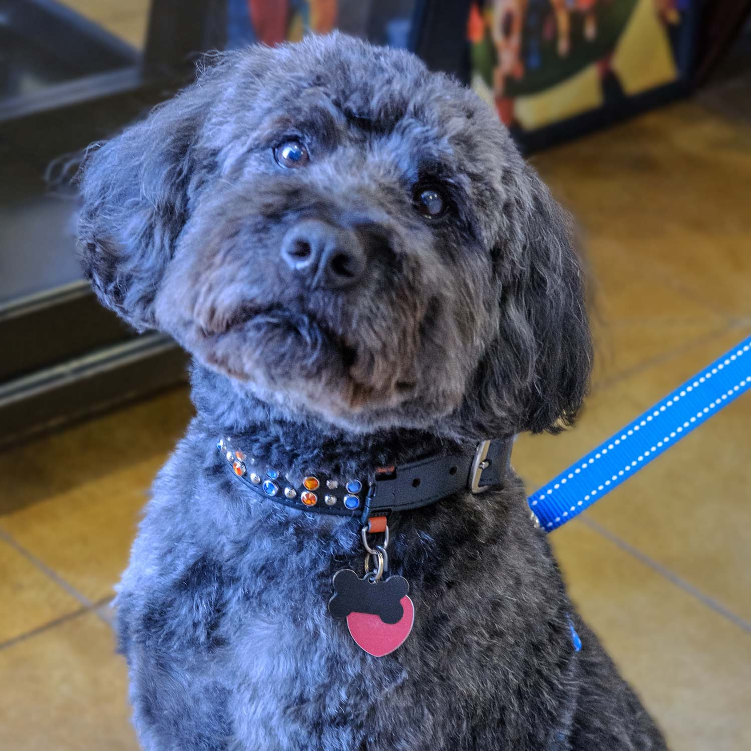 All dogs need a collar and leash. At Fancy Fur, we have a wide selection of both. Our offerings include patterned cloth collars from Elmo's Closet, as well as premium, custom-created Austrian crystal pet collars.