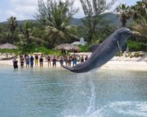 Dolphin_Lagoon_2.jpg