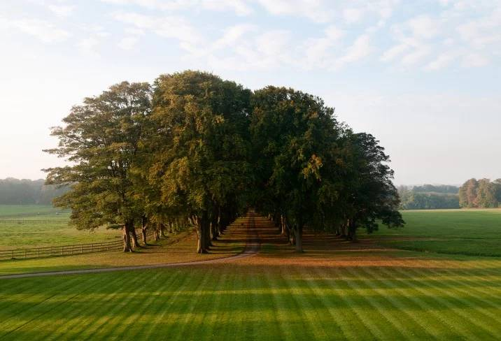 lucknam park_grounds.jpg