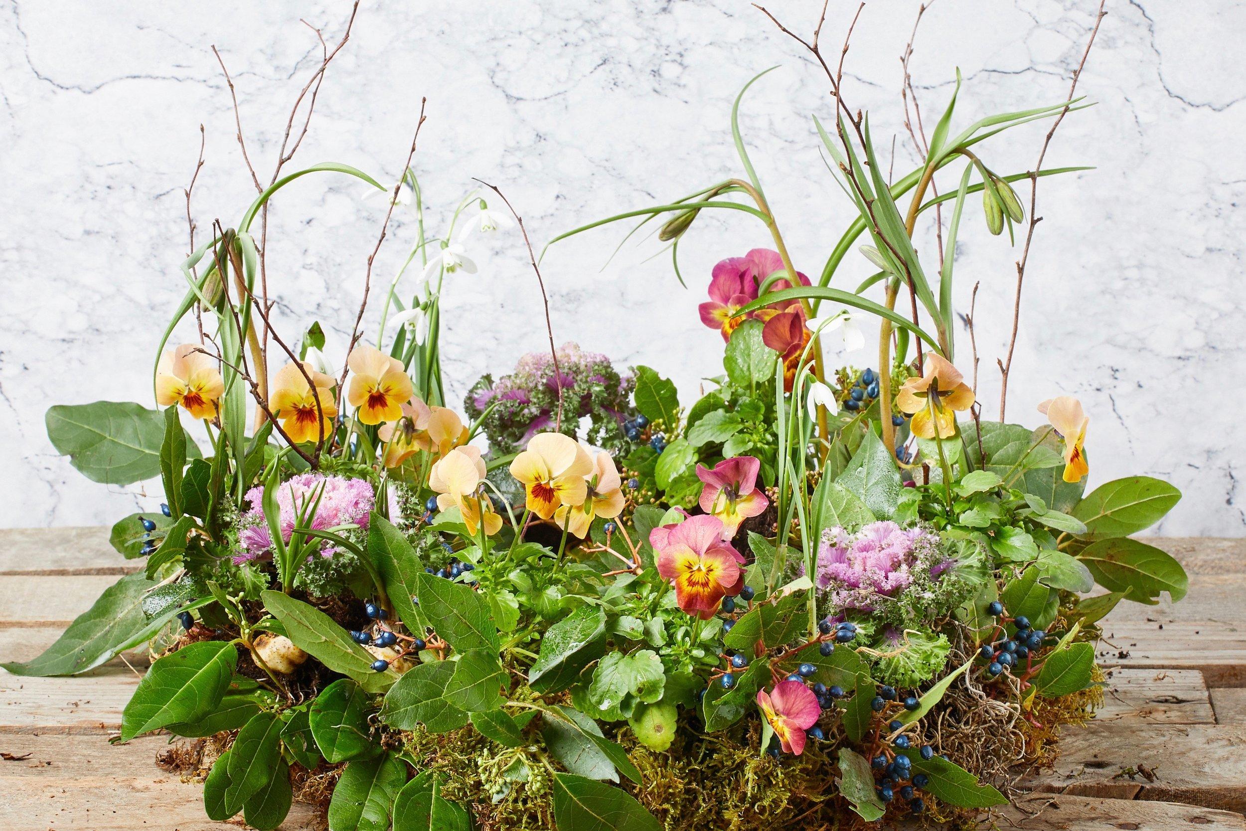 Flower Story10779.jpg