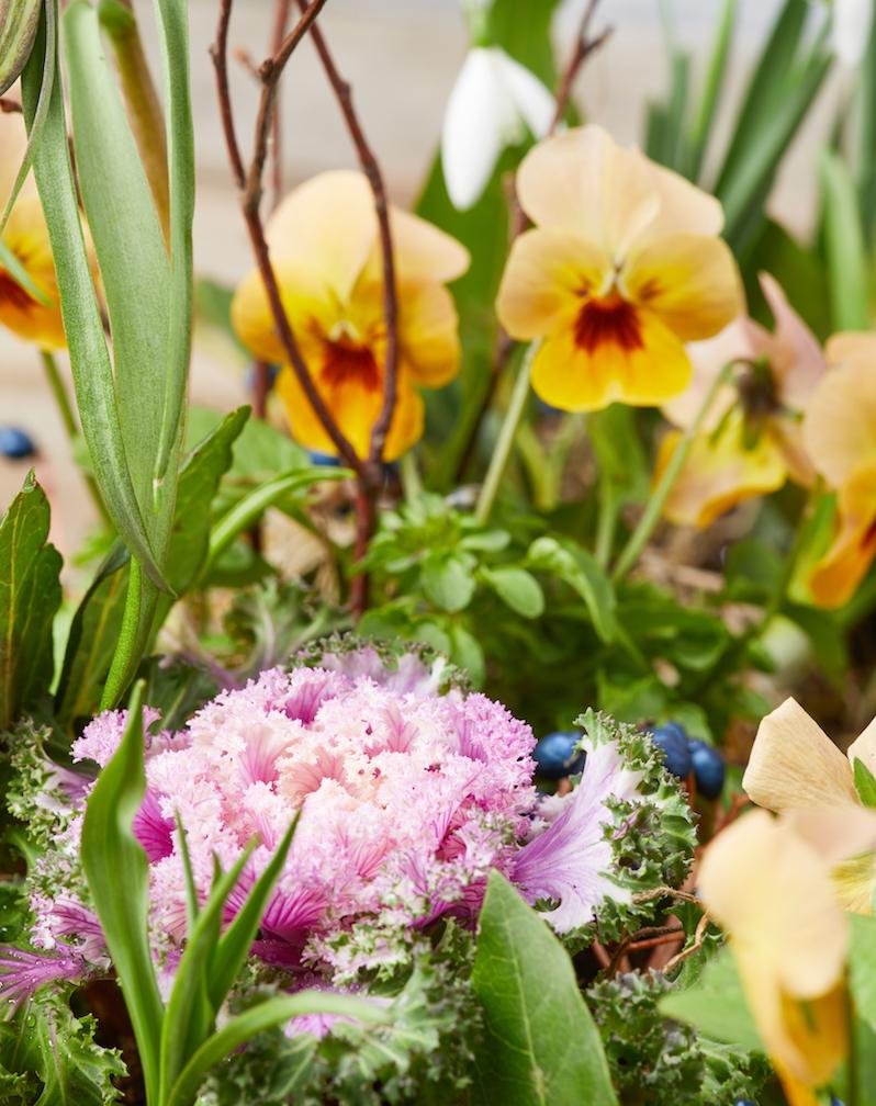 Flower Story10796.jpg
