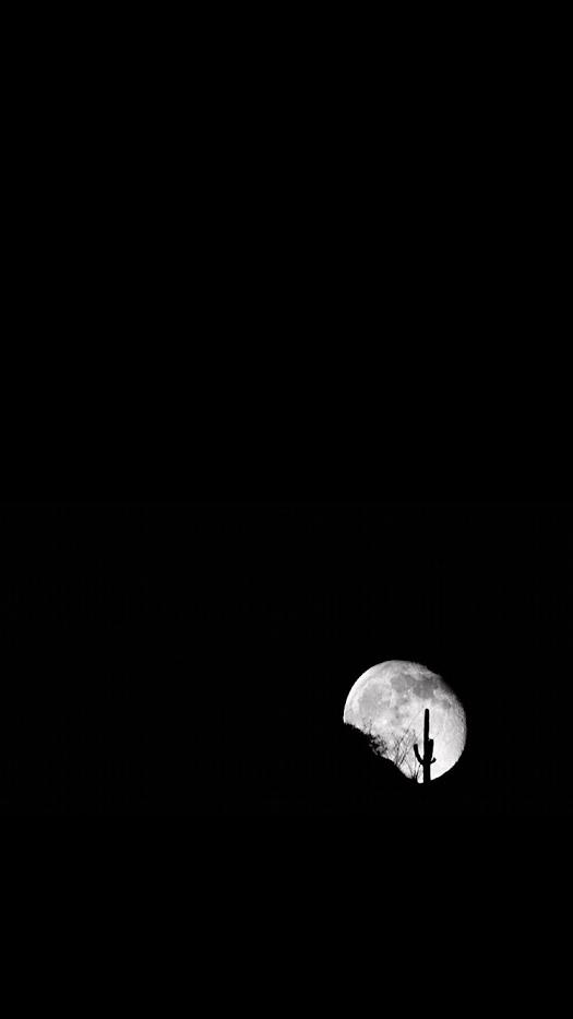 Moonlight in June