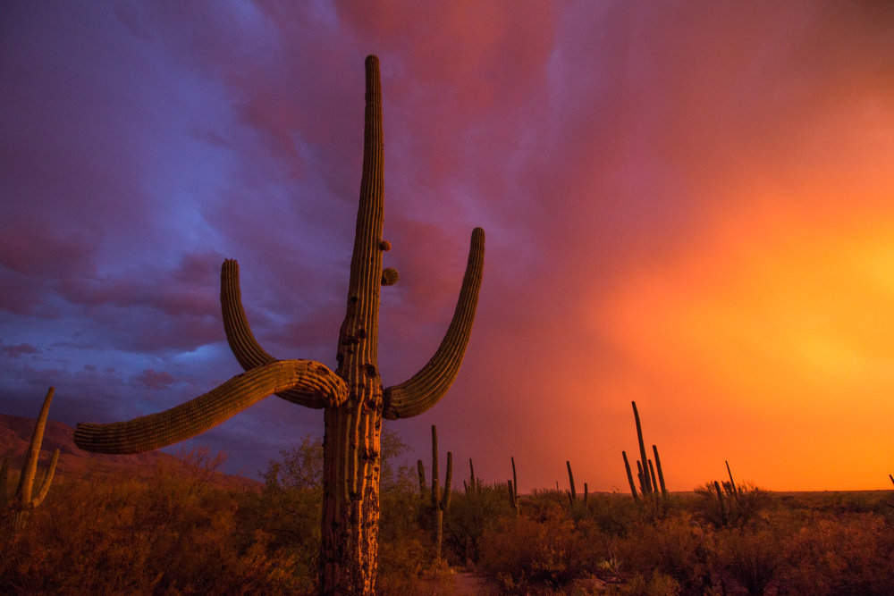 National Geographic - https://www.nationalgeographic.com/travel/destinations/north-america/united-states/national-parks/photos-sunset-wars-instagram-saguaro-joshua-tree/
