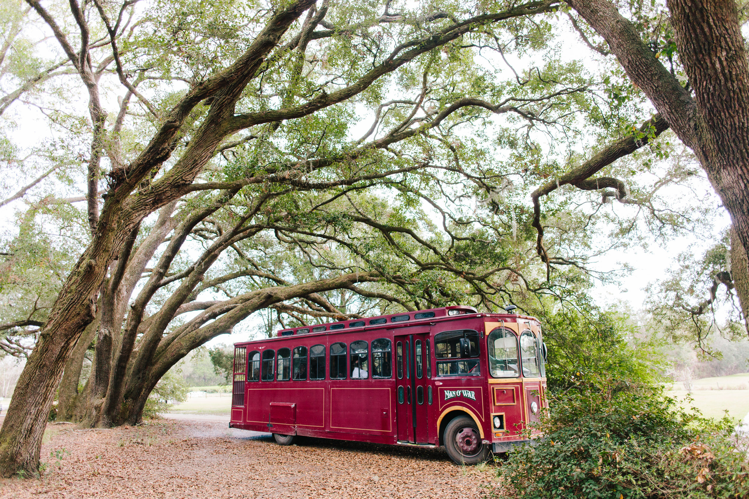 charleston tea plantation wedding-65.jpg