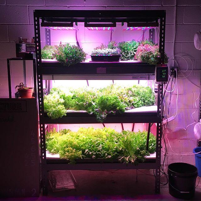 Build me!  www.plus.farm #verticalfarming #DIY #hydroponics #localfood