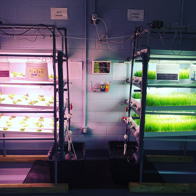The very first +Farm installed at @growing.futures is alive and thriving!!! Read all about it on @agritecture blog www.agritecture.com/post