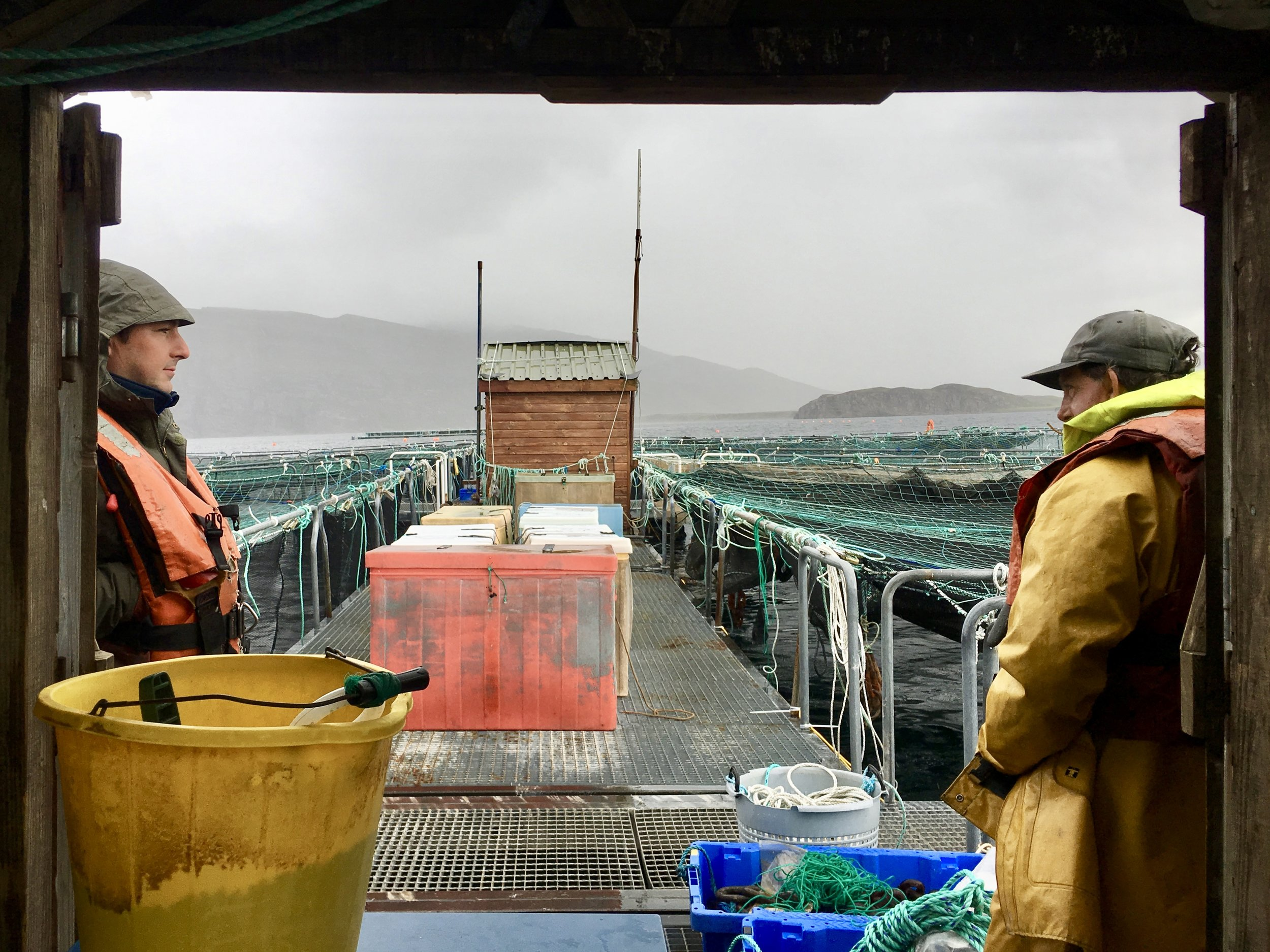 Scotland's $2 Billion Salmon Industry Is Thriving — But At What Cost? - for NPR's The Salt