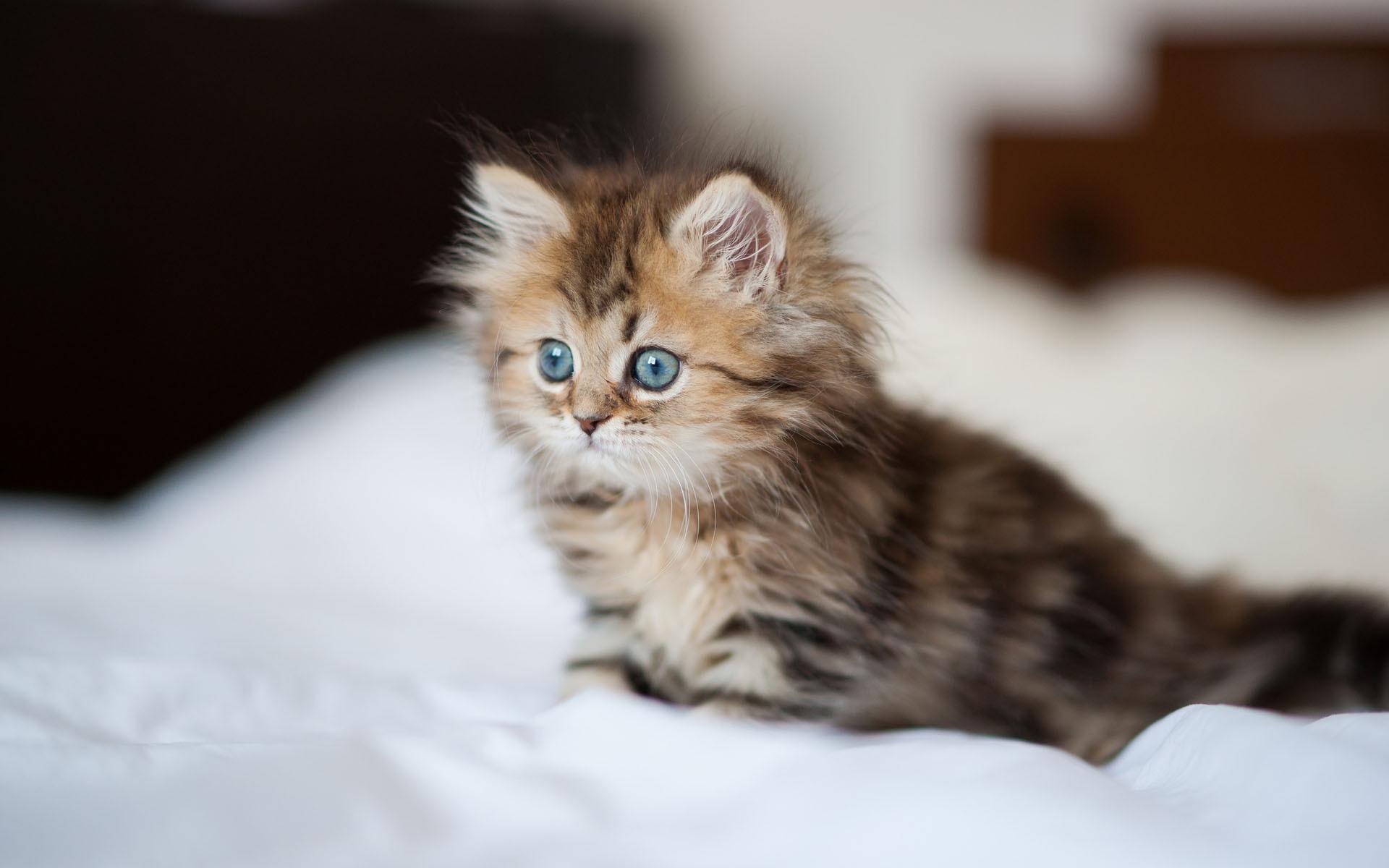 kittens-3-animals-34865316-1920-1200.jpg