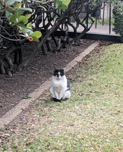meowcat.png