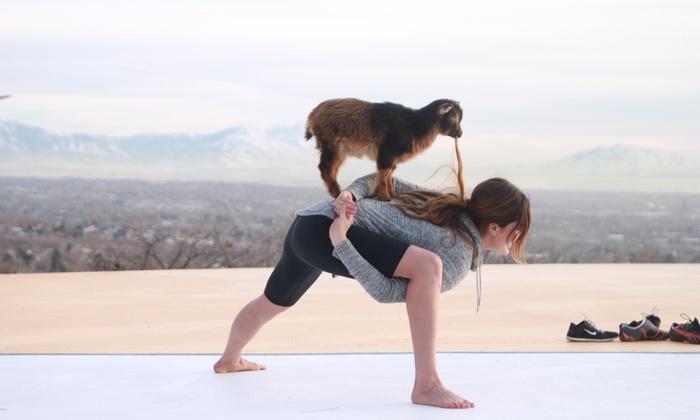 Goat Yoga -