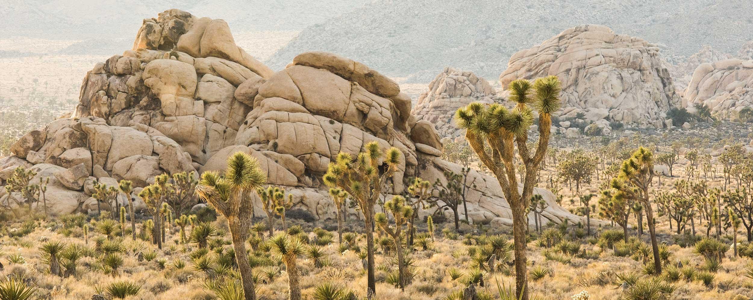 central-joshua-tree-desert2-casaplutonia.jpg