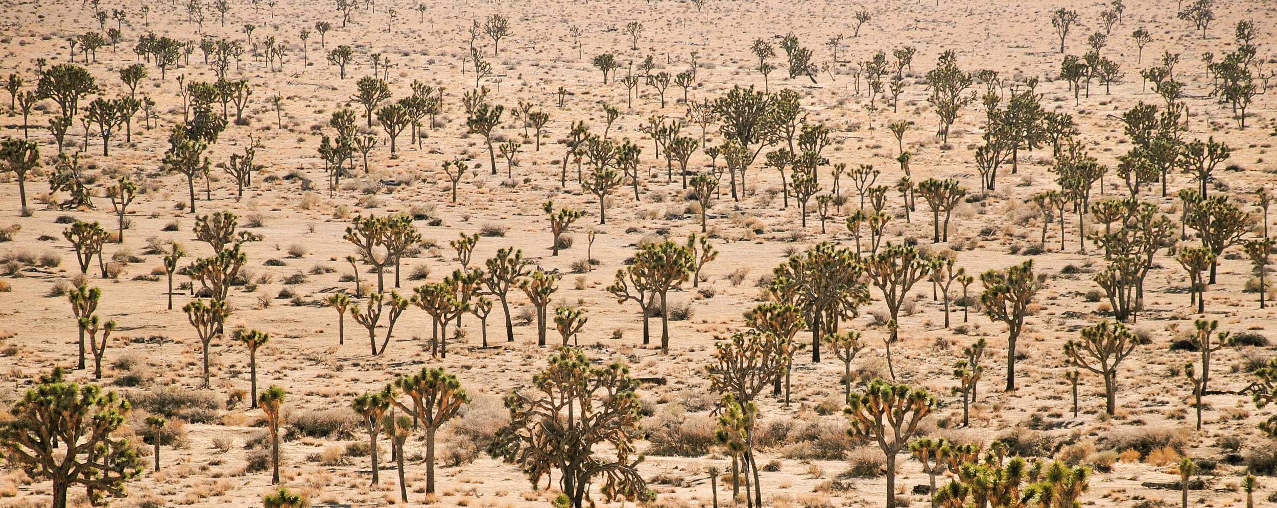 central-joshua-tree-desert-casaplutonia.jpg