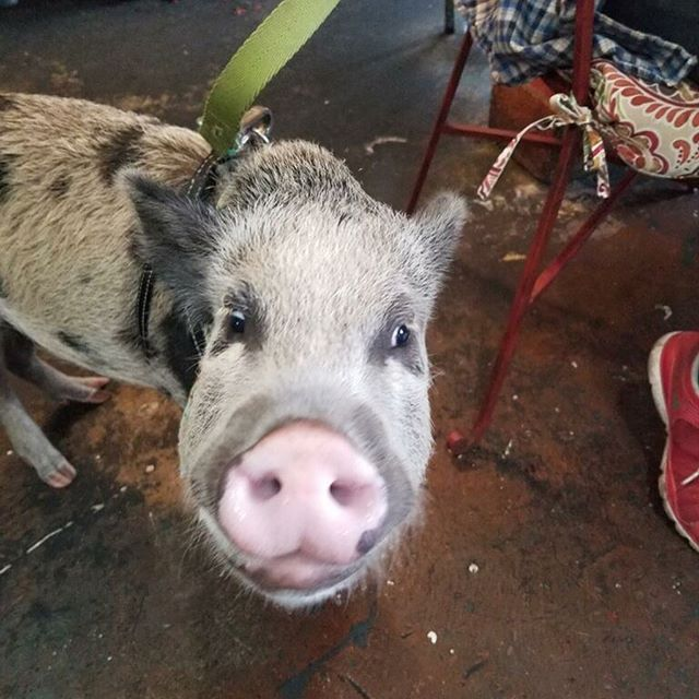 Mr. Snuggles paid us a visit and got his Brotha Dudes on! #oink #oink #Bham
