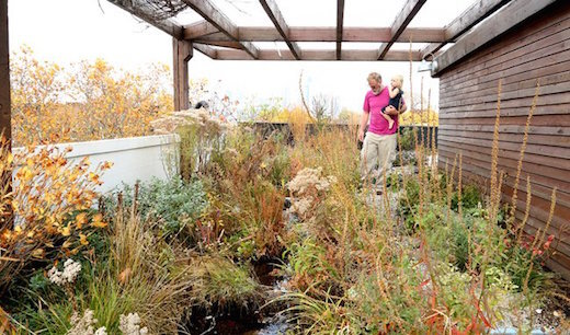 Green roof with koi pond atop the Eco Brooklyn Showhouse