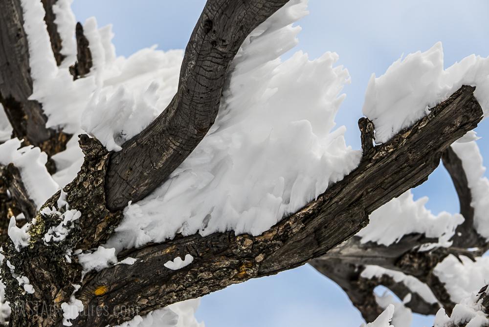 snowshoe jan7-8.jpg