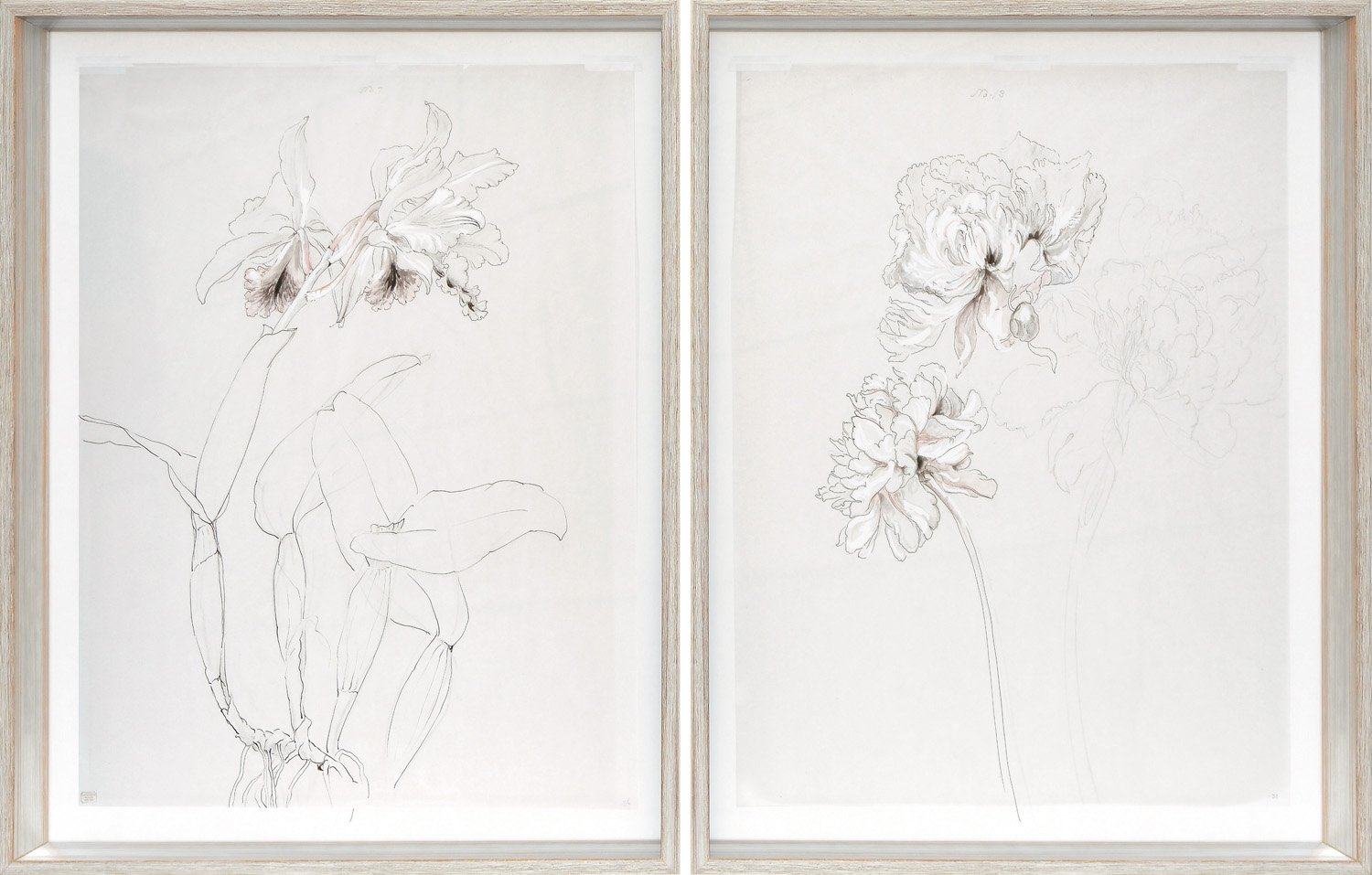 Drawing Studies, Orchid and Peony, $565 ea