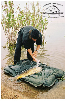 <p><strong>CARP CARE</strong><i>Part 8 →</i></p>