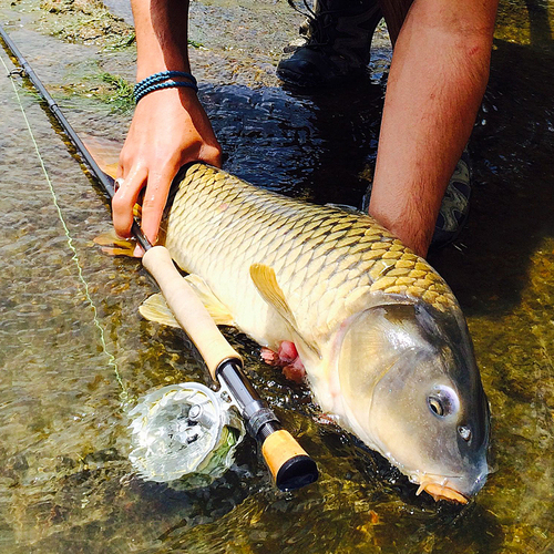 <p><strong>FLY FISHING FOR CARP</strong><i>Part 6 →</i></p>