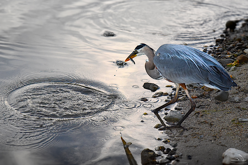 6-Watercraft-WB1_0430-Heron4crop.jpg