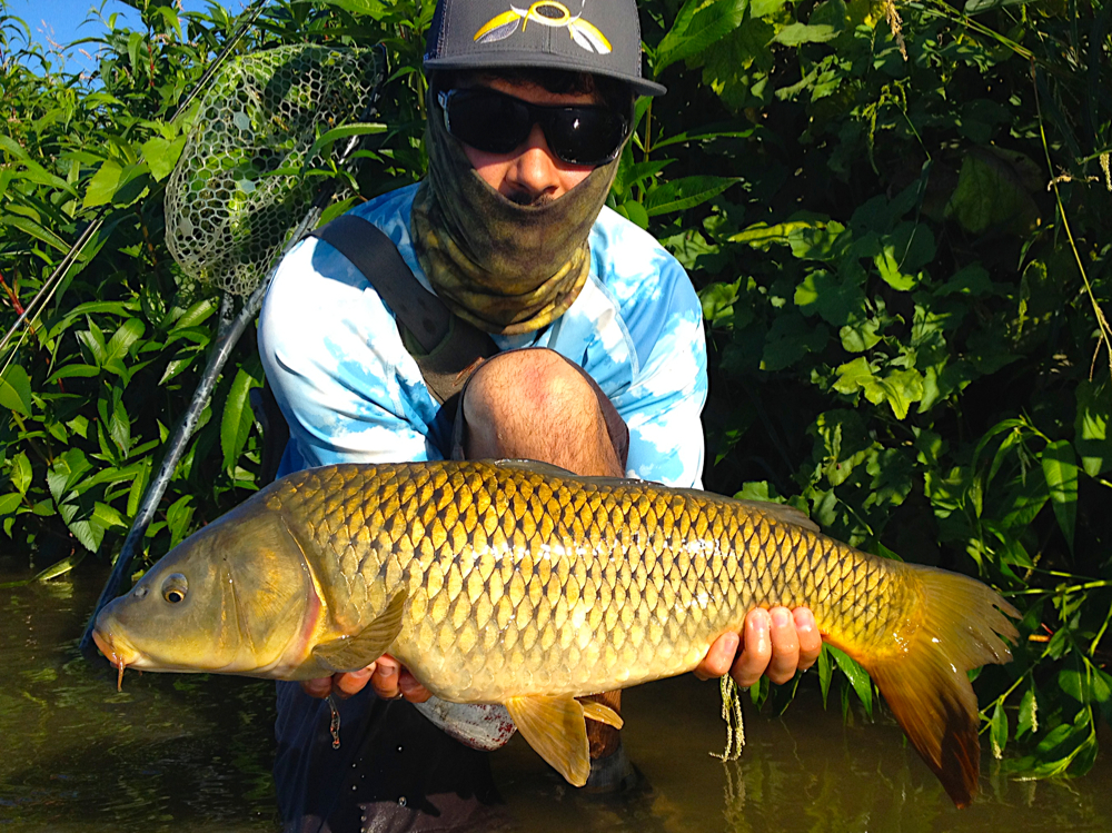 <p><strong>COMMON CARP</strong><i>More →</i></p>