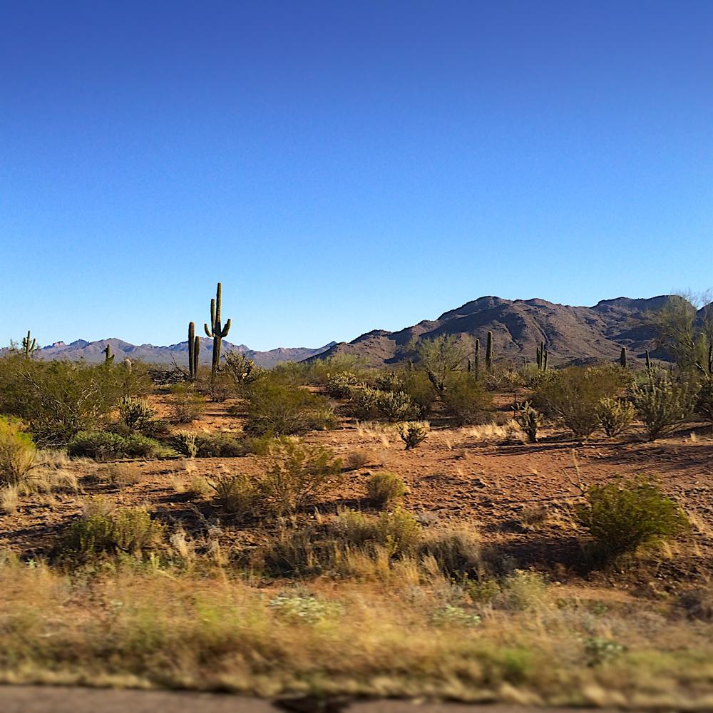 2.  IMG_5727-Desert-Scape-cropSM.jpg