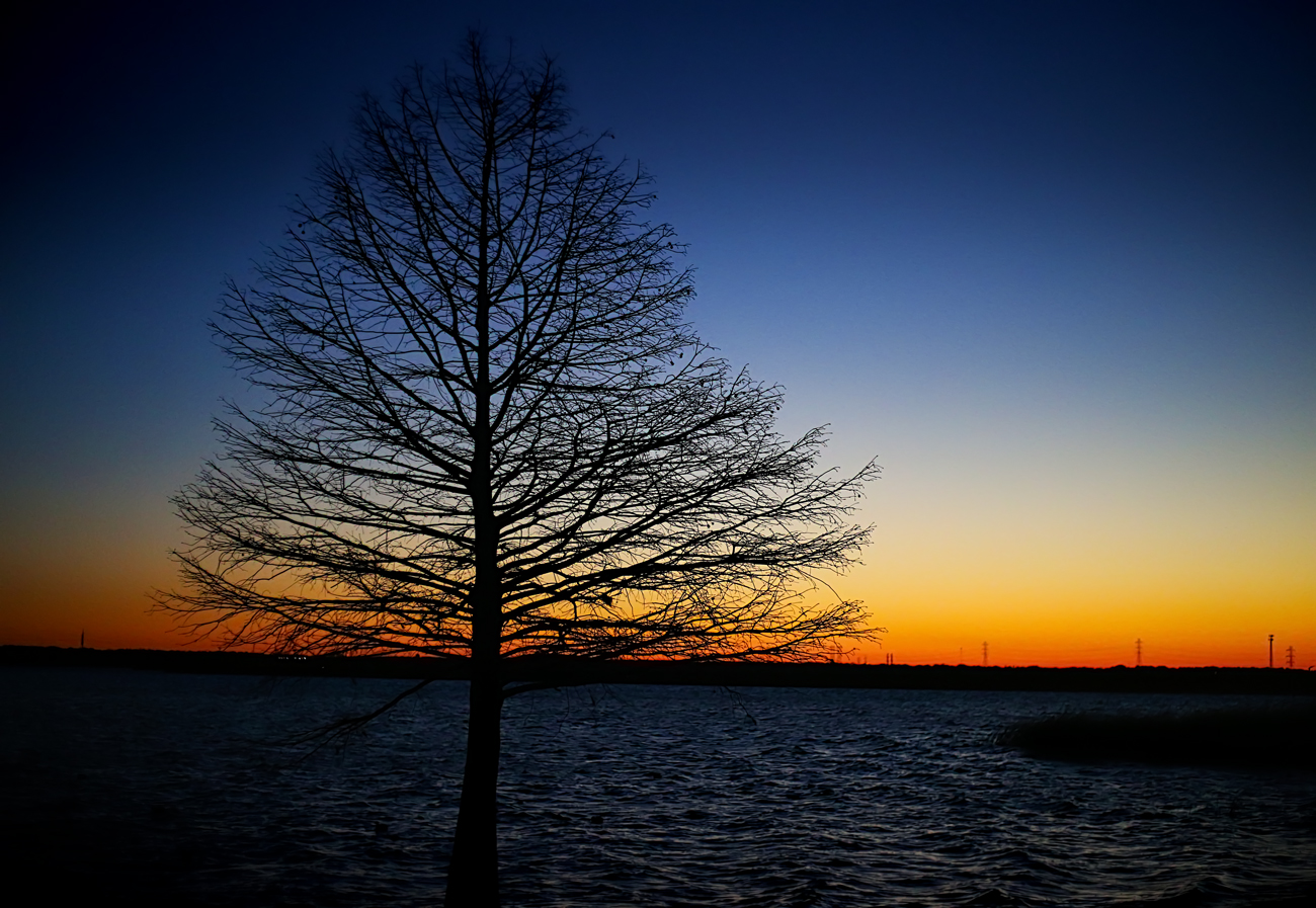 IMG_3357--Tree-Sunset-Edit-sm.jpg