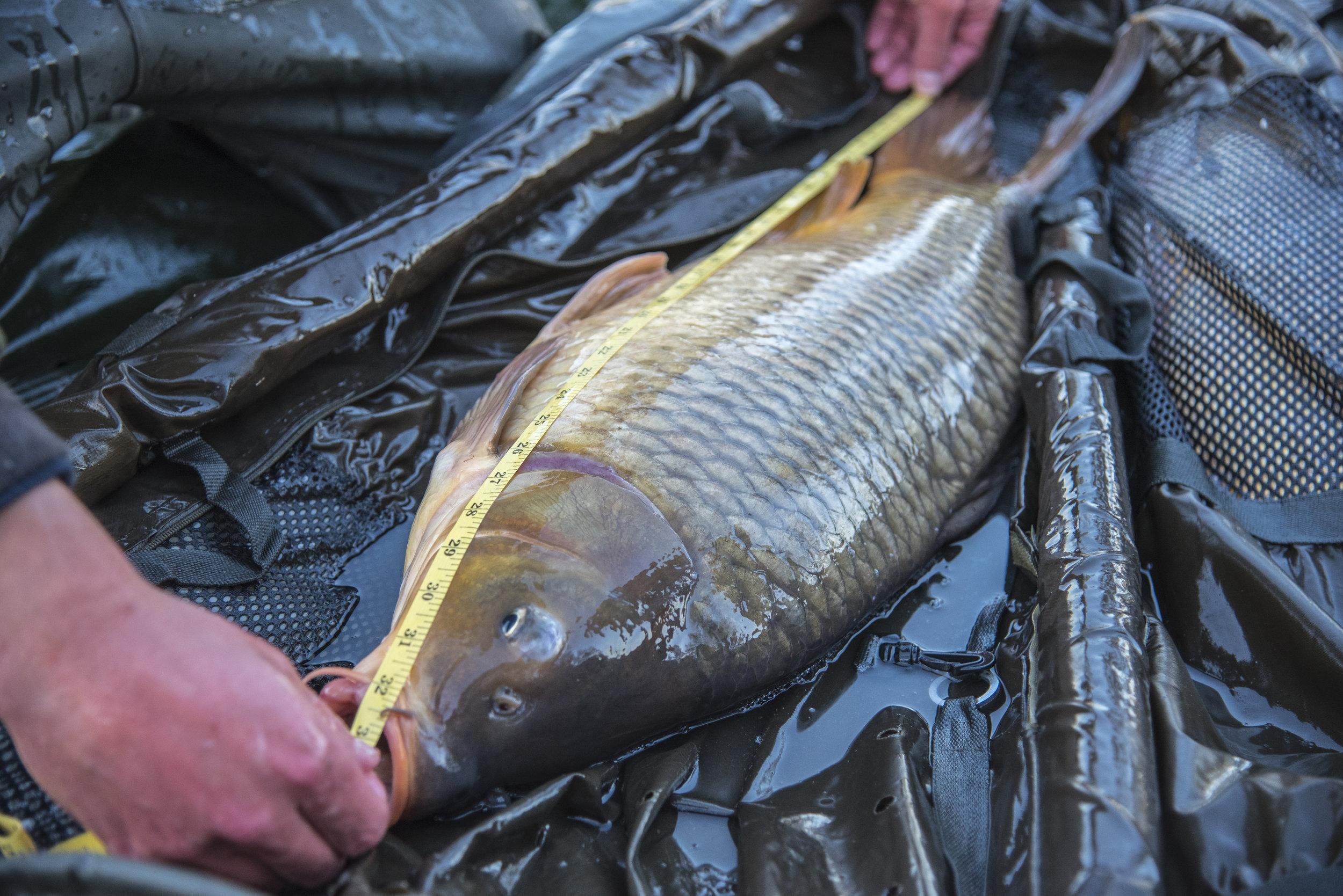 ANDREW FISH MAT TAPE LENGTH.jpg