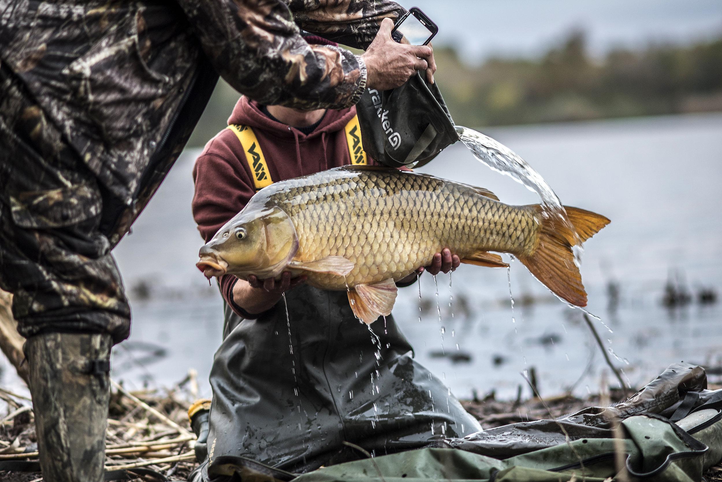 ANDREW WAYNE FISH SPLASH_2.jpg