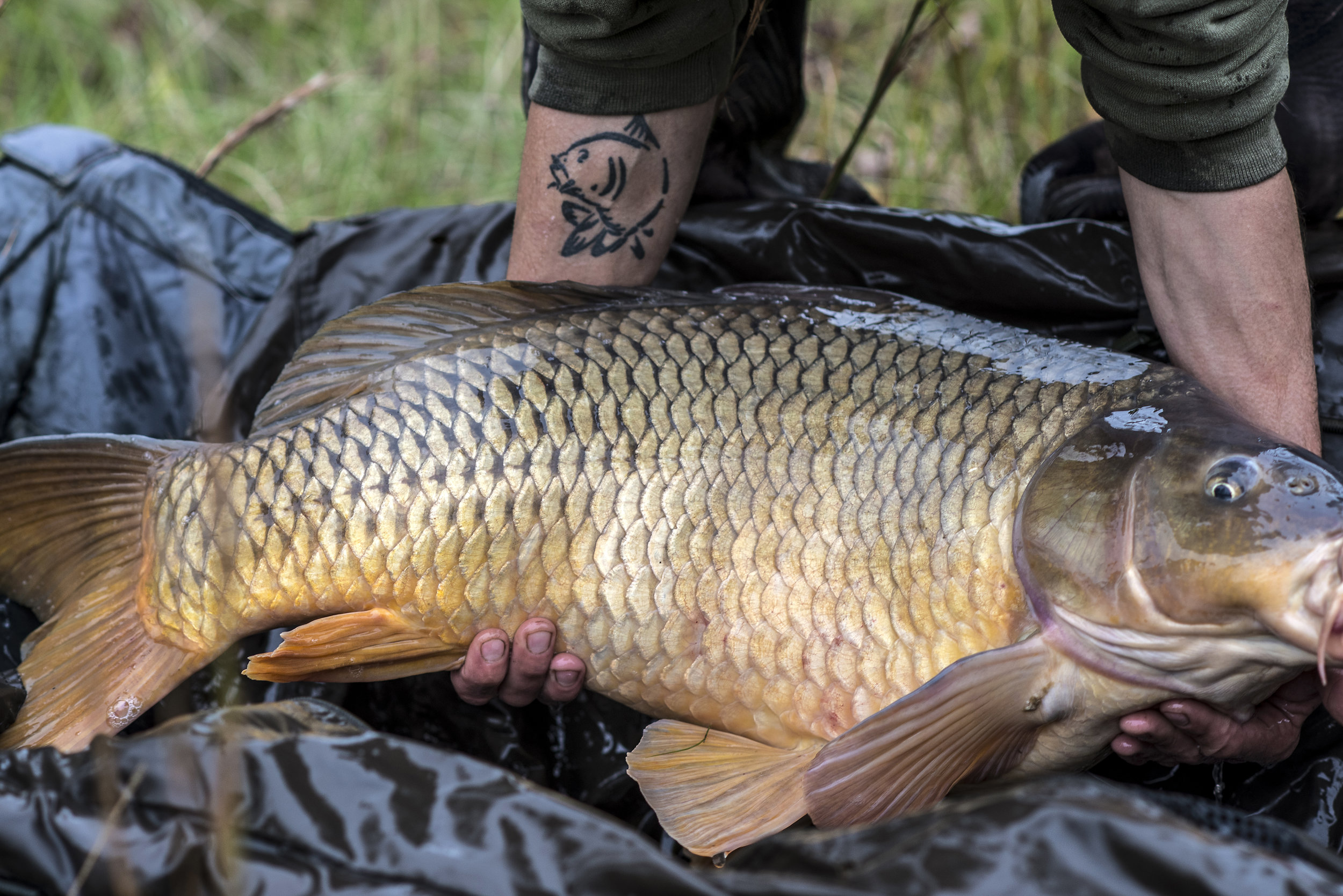 JOEY TATOO FISH CLOSER.jpg