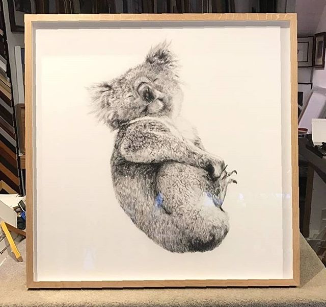 Custom framed in Natural Oak 'BLISS' Limited 800mm x 800mm Edition - signed and numbered via www.carlafletcher.com *** Frame in good condition here @petecourtneyau 😉 @houserules *** #houserules #houseruleson7 #interiordesign #renovation #bliss #koala #drawing #LimitedEdition #signed #carlafletcher #framing @funktionpictureframing