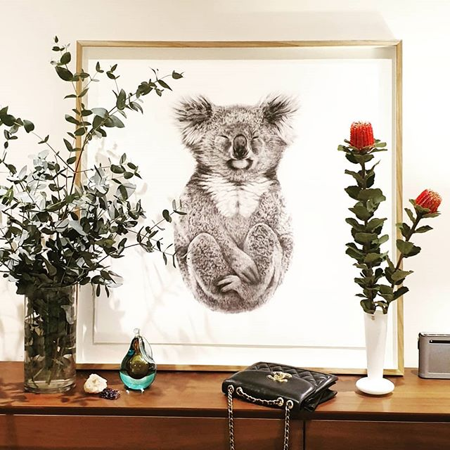 At home Australian Flora + Fauna 🥰 ---- image: 'The Alchemist' Limited Edition @carlalfletcher #Australia #Flora #Koala #pencil #drawing #LimitedEdition #interiordesign #australiagram #artcollector #art #artist #carlafletcher