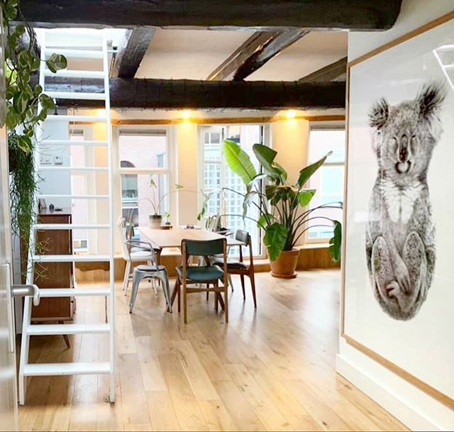 'The Alchemist' 1.2m x 1.7m floating in Marije's stunning loft home in The Netherlands - #dreams #Alchemist #drawing #artist #carlafletcher #LimitedEdition #koala #loftapartment #interiordesign #artcollector #Netherlands #🇳🇱 #😍 art: The Alchemist via @carlalfletcher
