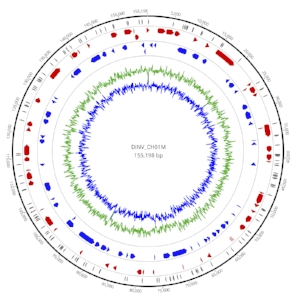 DiNV_genome_image4.jpg