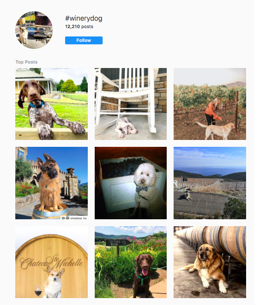 Instagram images categorized with the #winerydog hashtag