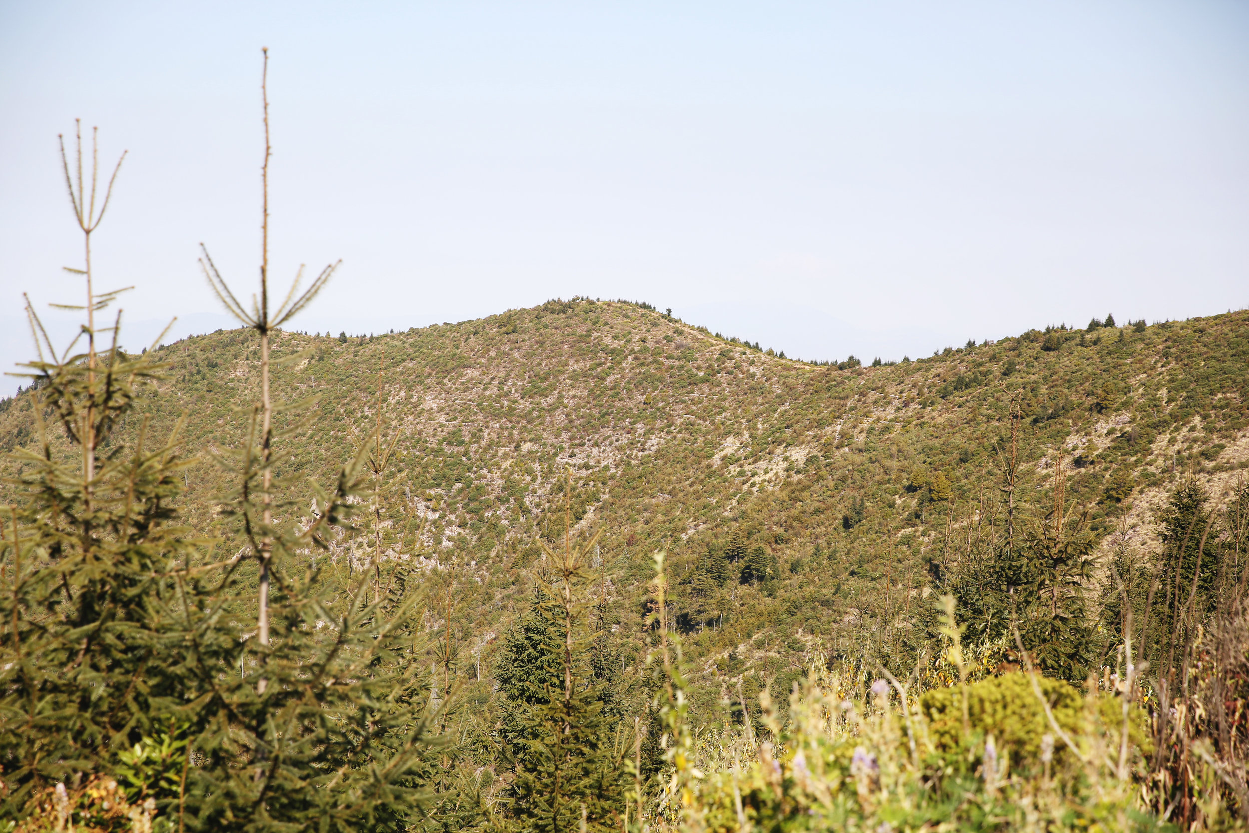 Degraded hilltops where we are replating the oyamel forest