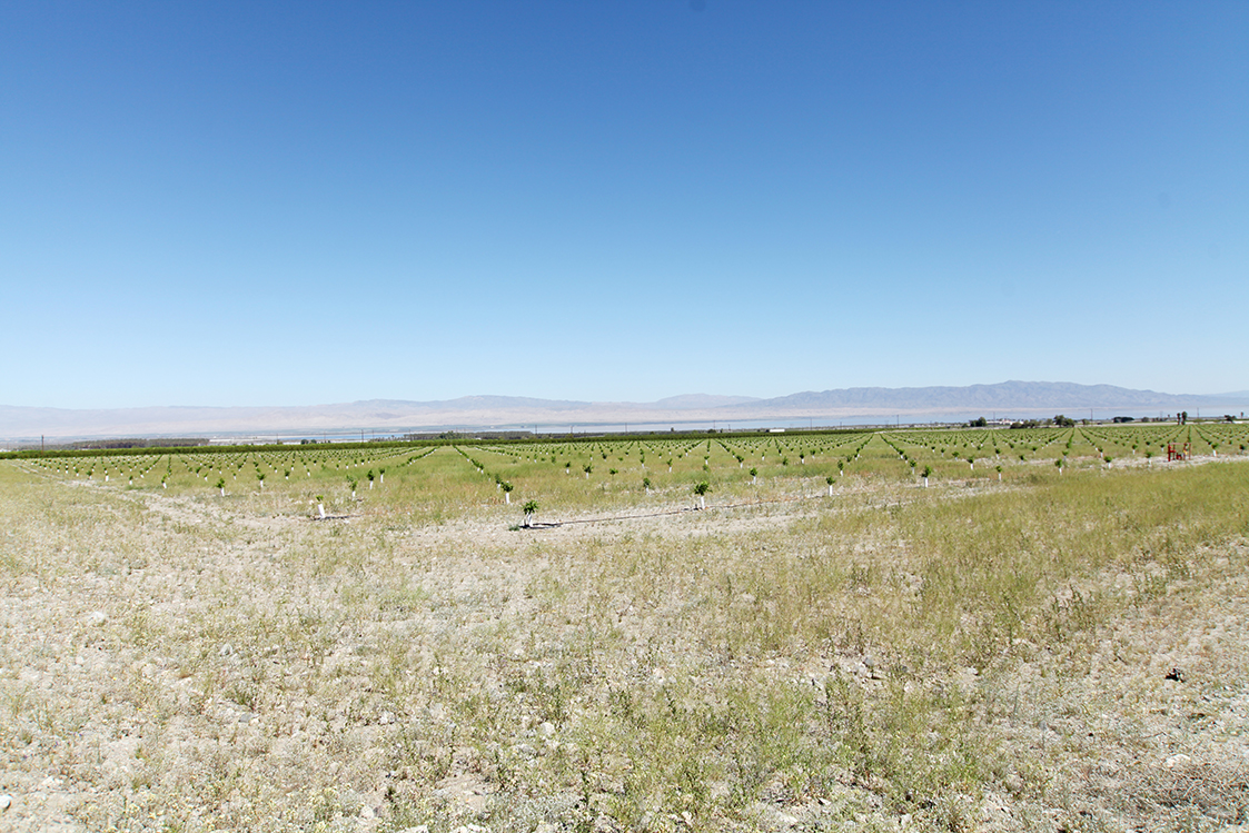 One of the planting sites around the Salton Sea to restore vegetation and water levels for a healthy ecosystem.