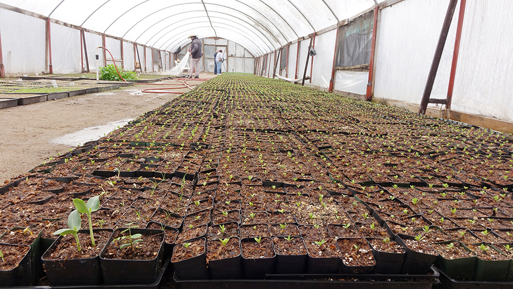 Visiting the nursery where seedlings are being propagated
